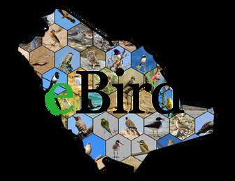 eBird Tutorial with Saudi Birding