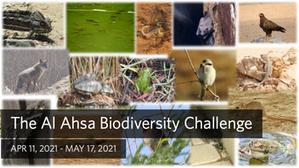 Spotlight on Biodiversity: The Al Ahsa Biodiversity Challenge