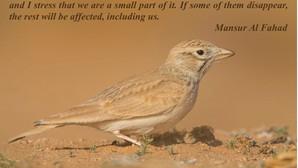 Feeling Hopeful with Mansur Al Fahad*