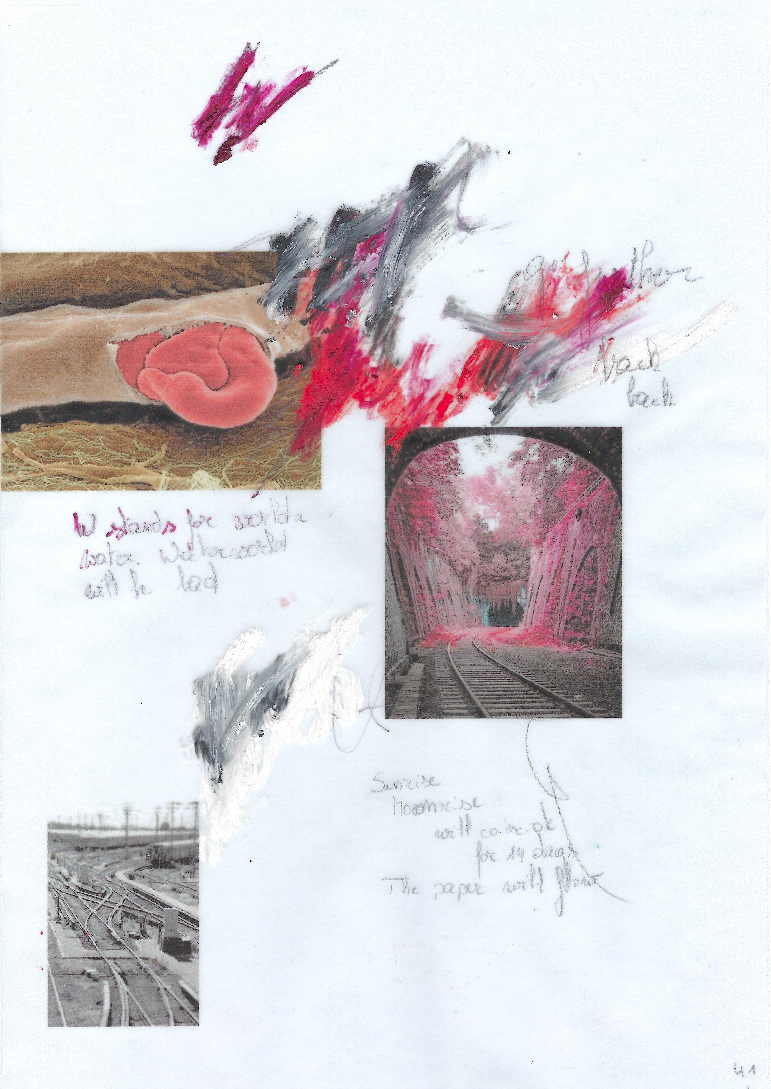 #41 (bloedbaan)