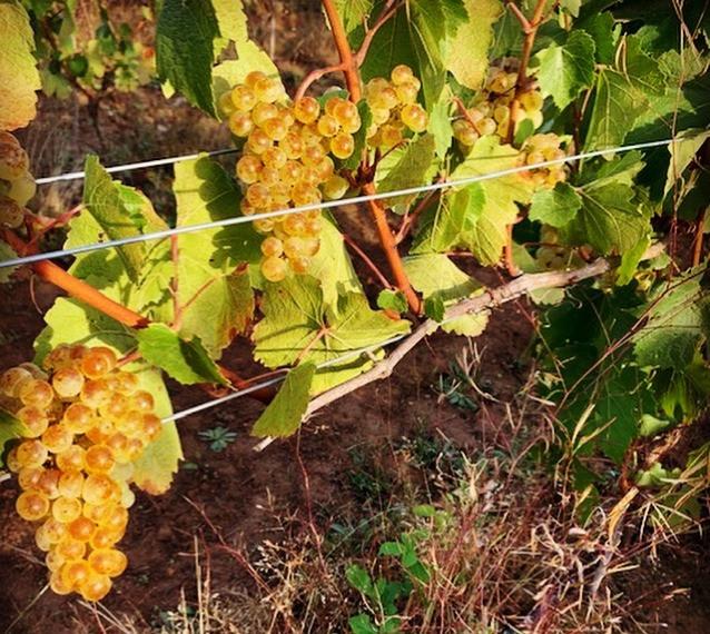 Bluebird Hill Chardonnay