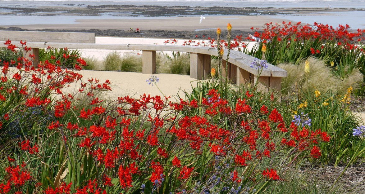 Seaside planting on Devon Coast