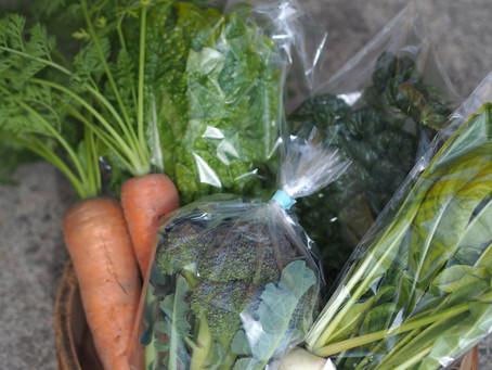 お野菜セット写真