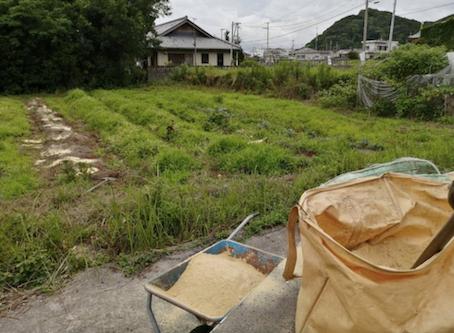 本日のお野菜セット(2020/6/26)