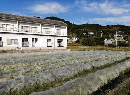本日のお野菜セット(2020/10/16)