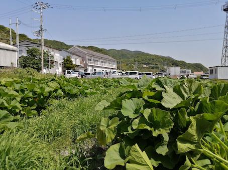 本日のお野菜セット(2021/5/10)