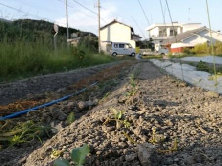 本日のお野菜セット(2020/8/26)