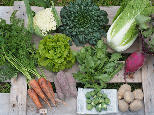 お野菜セット単発 Lサイズ(送料込み)
