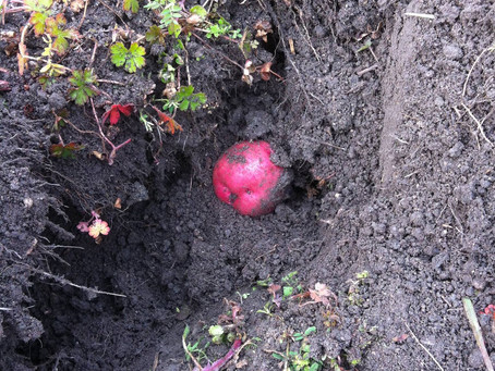 土の中に赤い玉が!?