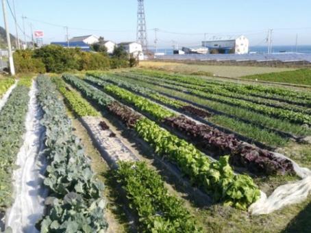 本日のお野菜セット(2019/12/9)