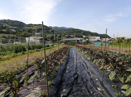 本日のお野菜セット(2021/6/2)
