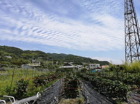本日のお野菜セット(2021/6/21)