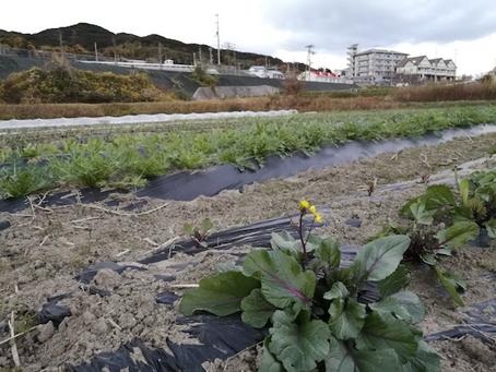 本日のお野菜セット(2020/12/21)