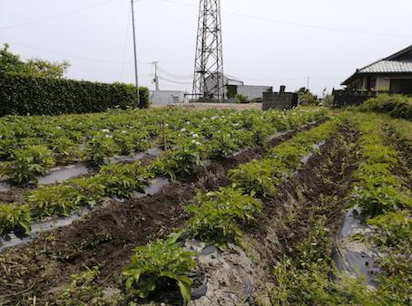 本日のお野菜セット(2021/5/12)