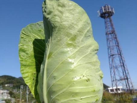 本日のお野菜セット(2019/11/6)