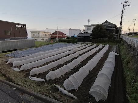 本日のお野菜セット(2021/9/10)