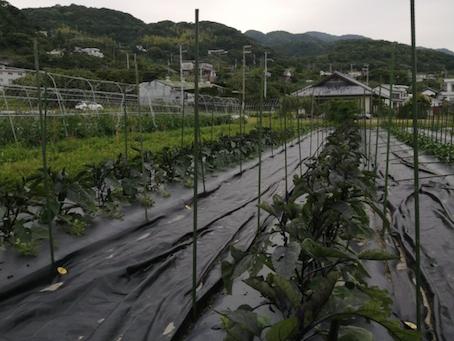 本日のお野菜セット(2021/5/28)