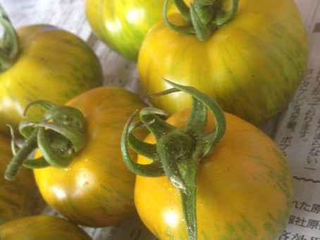 グリーンゼブラトマト