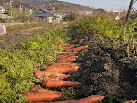 本日のお野菜セット(2021/1/13)