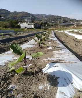 本日のお野菜セット(2019/4/19)