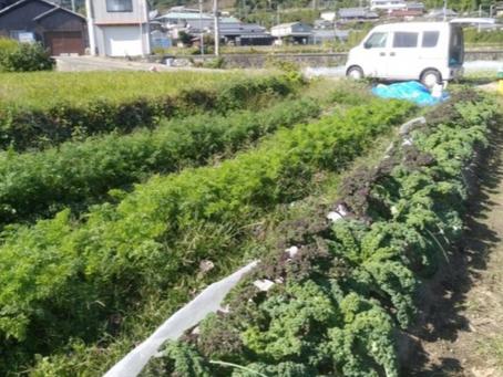 本日のお野菜セット(2019/11/1)