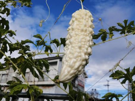 本日のお野菜セット(2021/8/9)