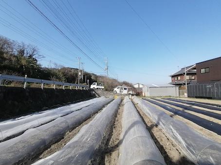 本日のお野菜セット(2021/3/24)