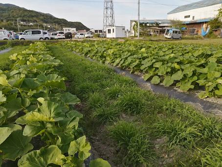 本日のお野菜セット(2021/4/28)