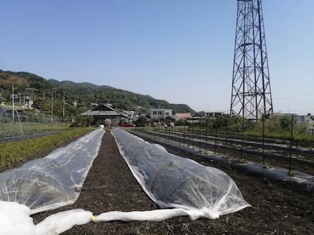 本日のお野菜セット(2021/4/30)