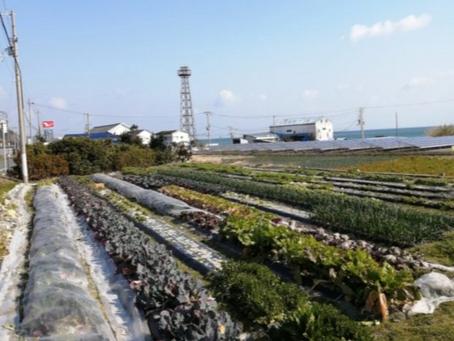本日のお野菜セット(2020/2/10)