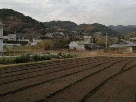 本日のお野菜セット(2020/2/26)
