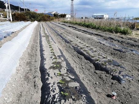 本日のお野菜セット(2021/2/24)