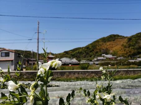 本日のお野菜セット(2021/4/26)