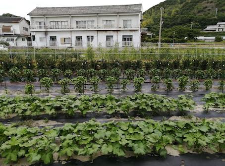 本日のお野菜セット(2021/6/14)