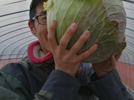 本日のお野菜セット(2020/2/7)