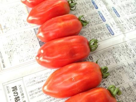 調理用トマト・サンマルツァーノ