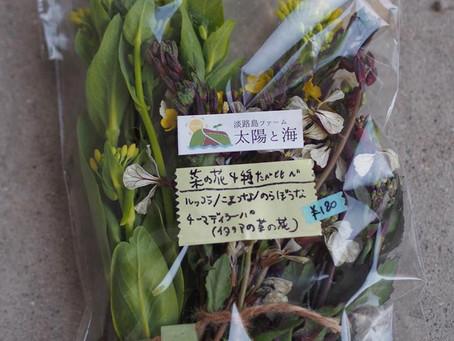 菜の花食べ比べセット