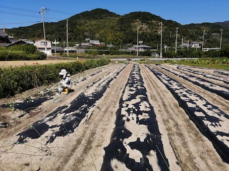 本日のお野菜セット(2021/9/22)