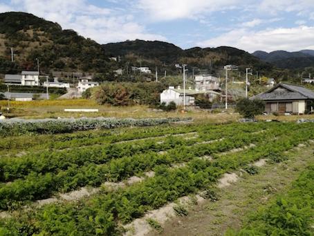 本日のお野菜セット(2020/11/6)