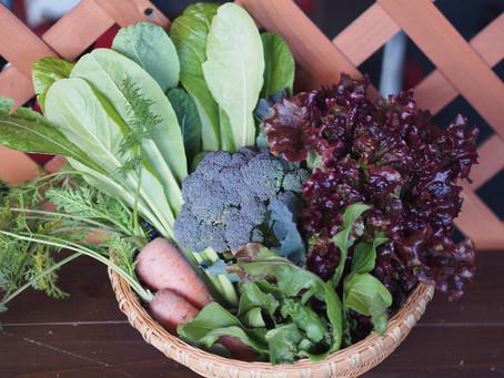 野菜セット写真 リベンジ