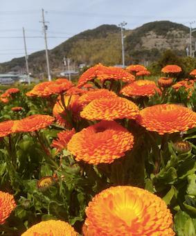 本日のお野菜セット(2019/3/20)