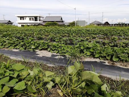 本日のお野菜セット(2021/6/18)