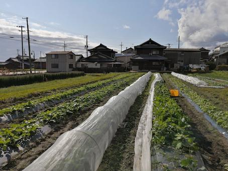 本日のお野菜セット(2020/11/23)