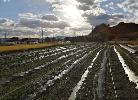 本日のお野菜セット(2020/12/18)