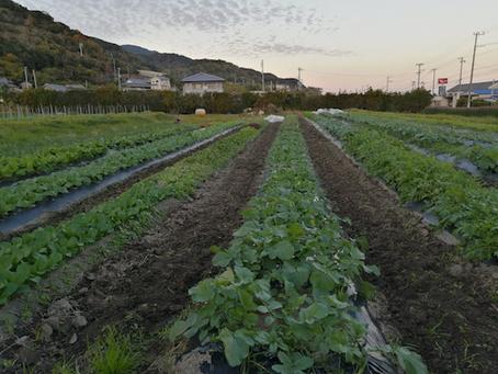 本日のお野菜セット(2020/11/30)