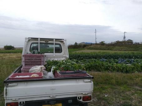 本日のお野菜セット(2019/11/22)