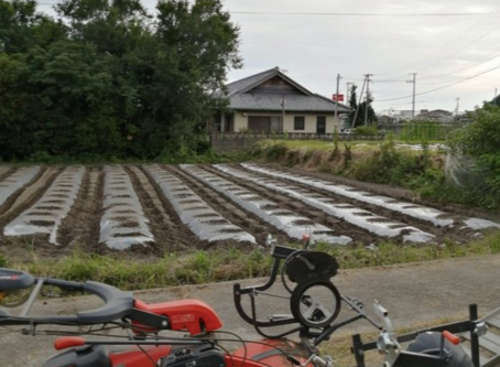 本日のお野菜セット(2020/7/24)