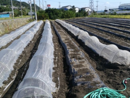 本日のお野菜セット(2019/10/4)