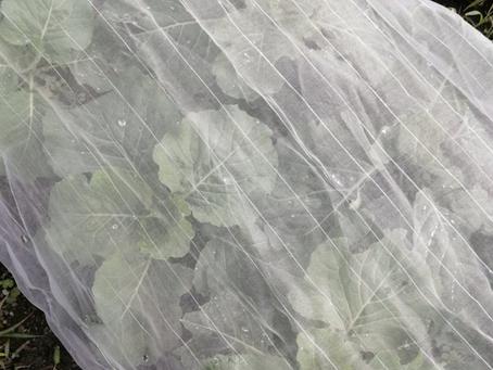 本日のお野菜セット(2020/10/21)