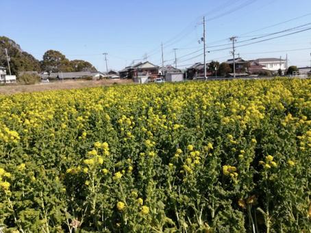 本日のお野菜セット(2020/2/21)